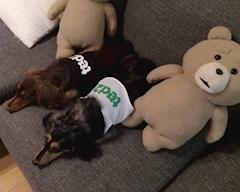 kTTEvxn6mqSCFAtOgi7 m - 犬の日!ฅ՞•ﻌ•՞ฅ