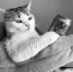 sdofkJYEhmYHq5ih30j m - 下の猫の写真見てほしい!!