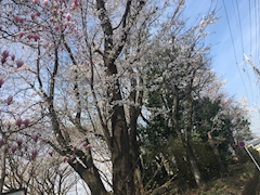 PQOBTkWAfWEXMpD1r4g m - 春~?