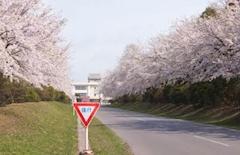 春きた?(*^^*)